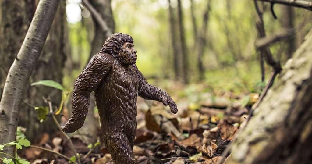 27-birthday-reflection-lessons-monkey-evolution